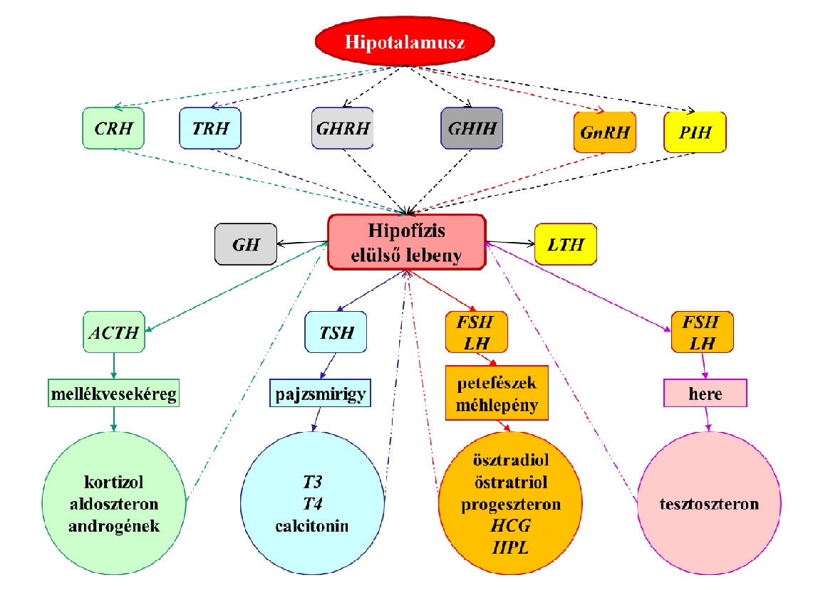 rák hormonális szabályozása