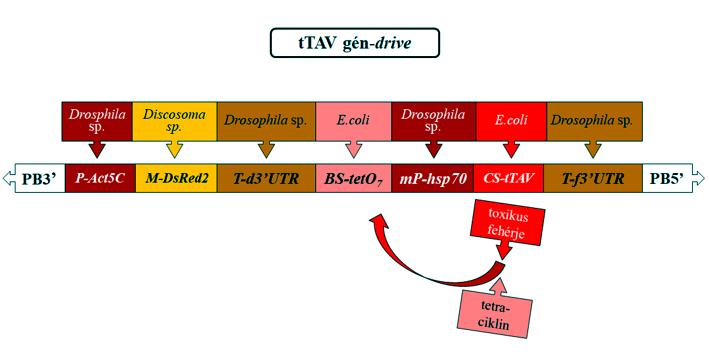 g57abra